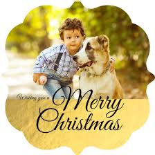 christmas card ideas with pets wording u0026 photo ideas for cats u0026 dogs