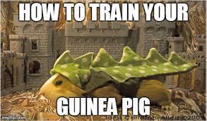 Berk Meme - image httygp jpg how to train your dragon wiki fandom