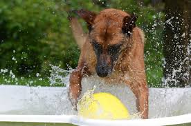 belgian shepherd south africa what to do if your dog is hyperactive canine sports centre