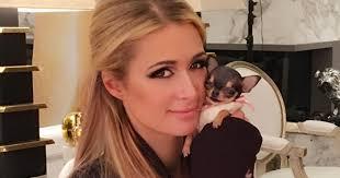 What Happened To Paris Hilton - paris hilton gets tiny new dog after u0027spending 8 000 u0027 to add to
