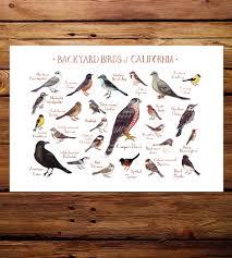 Backyard Birds Utah Northwest State Backyard Birds Art Print Features Local Pride