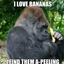 Funny Gorilla Meme - i love bananas i find them a peeling gorilla quickmeme