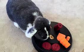 Come Costruire Una Casetta Per Conigli by Giocare Con Il Coniglio Alcune Idee Per Socializzare Assieme