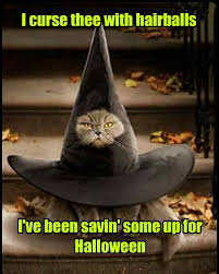 Be Prepared Meme - lolcats curse lol at funny cat memes funny cat pictures with