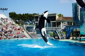 Sea World San Diego Map by San Diego Vacation 10 Fun Things To Do