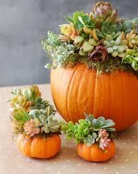 The Best Pumpkin Decorating Ideas Best 25 Pumpkin Decorations Ideas On Pinterest Pumpkin