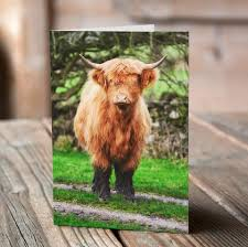 cow greeting cards highland cow greeting cards villager jim s shop
