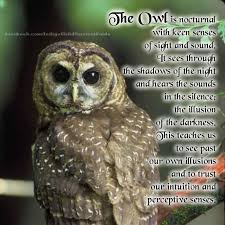 The Owl Barn Gift Collection 54 Best The Owl Is My Spirit Animal Images On Pinterest Diy Art