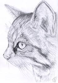 scottish wild cat sketch by janiceduke on deviantart
