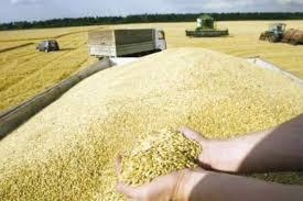 chambre d agriculture 02 la chambre d agriculture propose la révision des prix des céréales