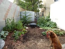 oregano life in our little la garden