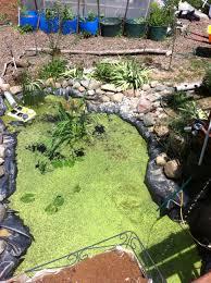 100 backyard tilapia triyae com u003d build a homemade pond