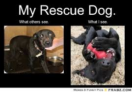 Weekend Dog Meme - come see us in pawson this weekend mystery dog rescue