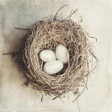 the nest home decor the perfect nest photograph by lisa russo