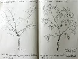 part 3 project 1 exercise 1 u2013 sketching individual trees