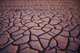 soil pollution causes and effects that are seriously eye opening