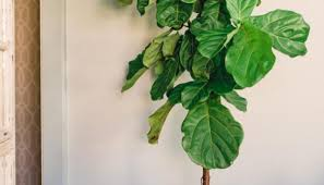 Best Indoor House Plants Best Indoor Plants Melbourne We Are Inscape Indoor Plant Hire