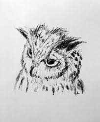 cute owl drawings fine art america
