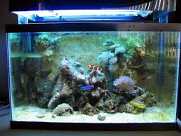Live Rock Aquascaping Ideas Bring Back The Wall Rock Wall Aquascaping News Reef Builders