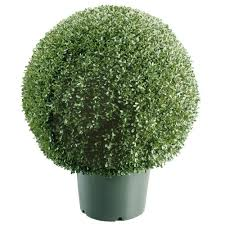 national tree company 22 in mini boxwood shaped artificial