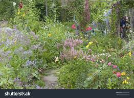cottage garden flowers wild flowers garden path cottage garden stock photo 108569588