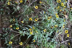 native plants of alabama hidden hills garden garden shenanigans page 8