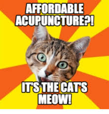 Acupuncture Meme - affordable acupuncture its the cats meow acupuncture meme on me me