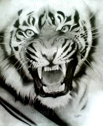 image detail for siberian tiger pencil drawing by starlite18 jpg