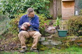 chickens in backyard backyard birds flux magazine