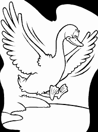 birds duck animals coloring pages u0026 coloring book