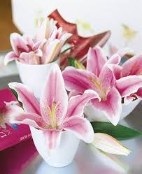 pink lilies lilies