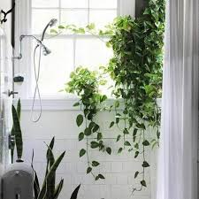 plants that grow in dark rooms home decorating ideas bathroom feutute bathroom plants dark rooms