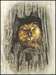 owl in tree paper tole 3d craft kit size 6x8 6490