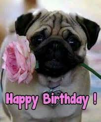 Happy Birthday Pug Meme - happy birthday happy birthday pinterest happy birthday