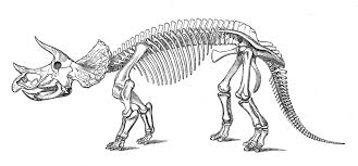 dinosaur skeleton free coloring pages on art coloring pages