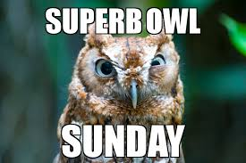 Superb Owl Meme - superb owl wcai