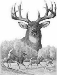 free deer print wood burning patterns burt and beulah whitetail