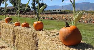 spirit halloween reno halloween activities for the whole family visitrenotahoe com