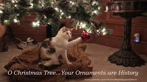 cat s experience with tree ornament