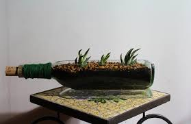 cactus and tender succulents forum wifes homemade wine bottle