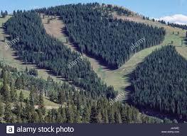 Vail Mountain Map Vail Mountain Eagle County Colorado Usa Grass Covers The Ski