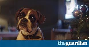 boxer dog shows 2016 john lewis 2016 christmas advert meet buster u2013 video global
