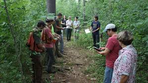 maine native plants striding to better forests for native plants college of natural