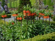 perennial plants for fall perennial flowers hgtv fall blooming flowers best fall flowers extend the season with fall