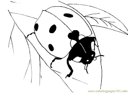 dk coloring pages ladybug leaf coloring page free ladybugs coloring pages