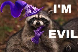 Evil Raccoon Meme - beautiful evil raccoon meme evil raccoon meme excellent flags the