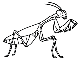 coloring pages insects bugs grasshopper coloring pages grasshopper coloring pages coloring pages