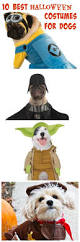 Ebay Halloween Costumes Adults 25 Small Dog Halloween Costumes Ideas Small