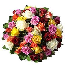different color roses flower meanings by their color variety and numbers