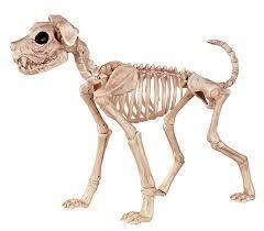 amazon com crazy bonez skeleton dog buster bonez toys u0026 games